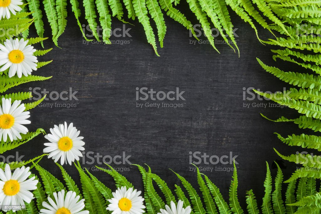 Frame created from green ferns and daisy flowers on the black...