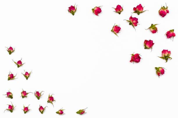 Frame for text from dried flowers of rose on white background picture id658814238?b=1&k=6&m=658814238&s=612x612&w=0&h=okintqtee  cb7mfcl4kzfn2kzjwnpd7baprew nl4q=