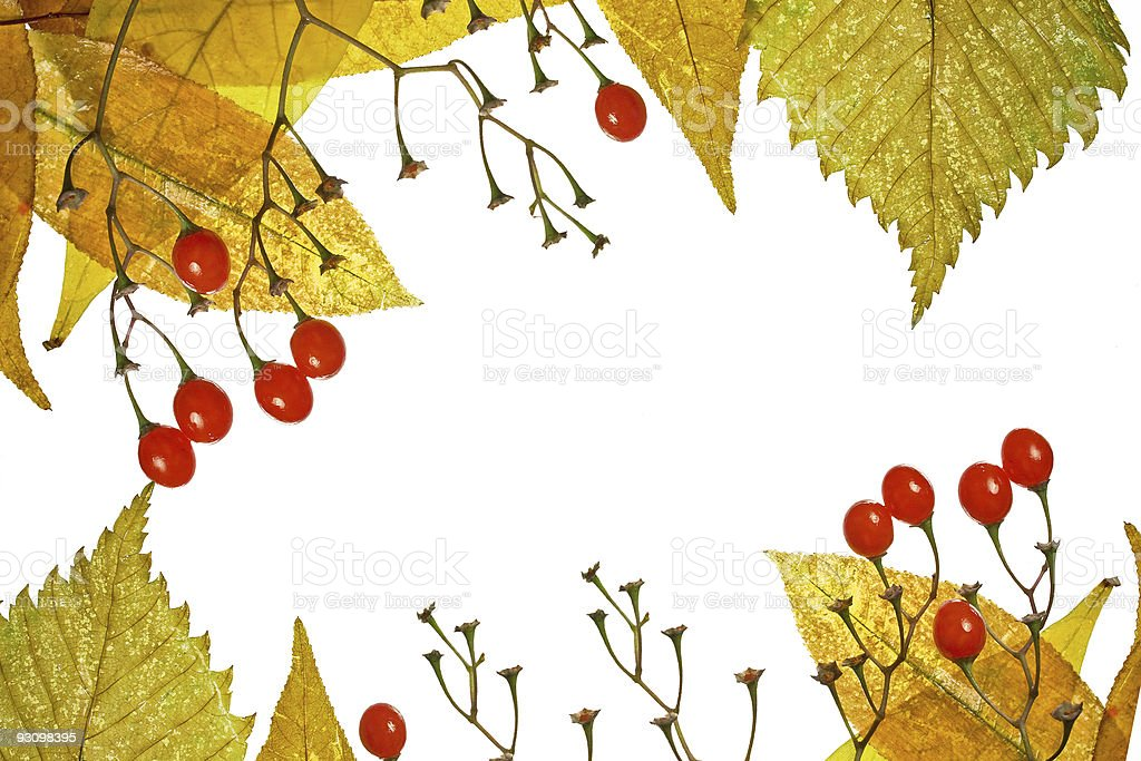 Frame from autumn leaves and berries royalty-free stock photo
