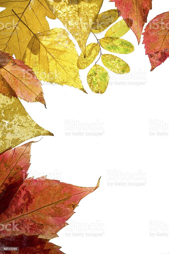 Frame from autumn leaves - Royalty-free Beyaz Stok görsel