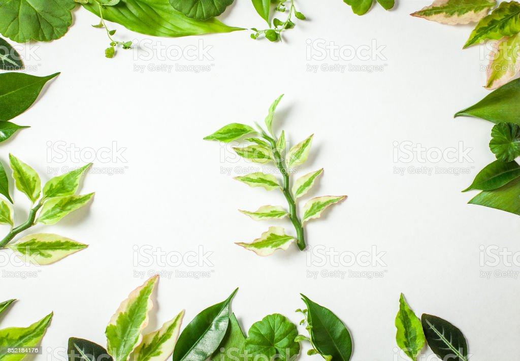 Frame from green leaves on a clean sheet with a green sprig stock photo
