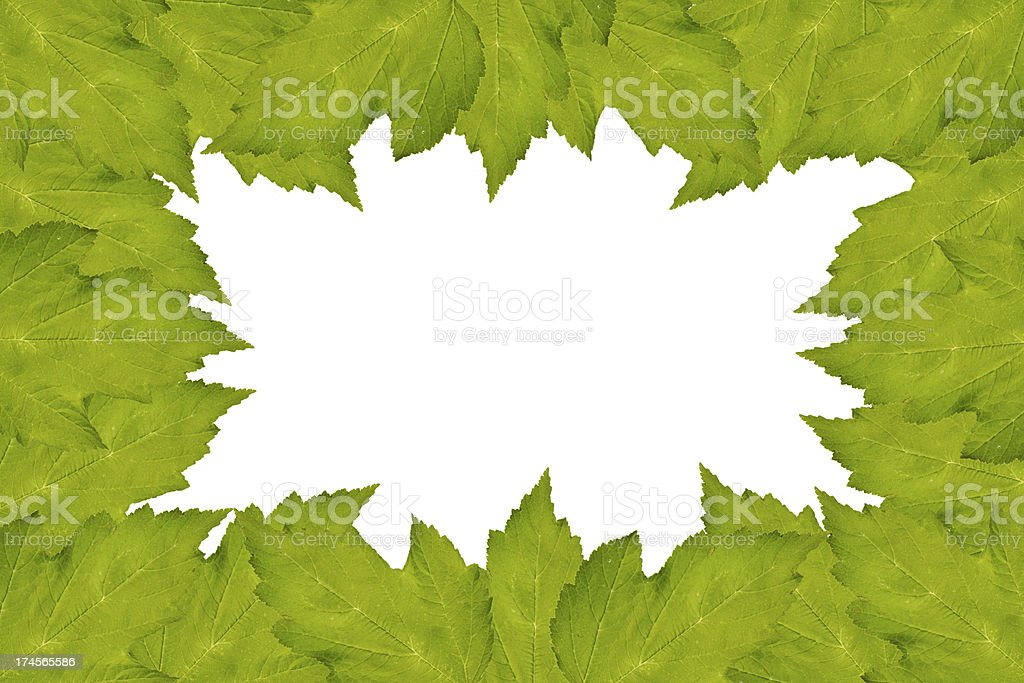 Frame from leaves of a tree royalty-free stock photo