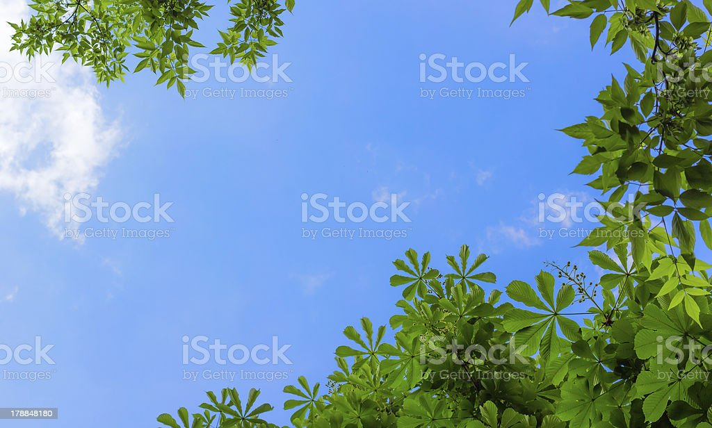 Frame from leaves of chestnut royalty-free stock photo