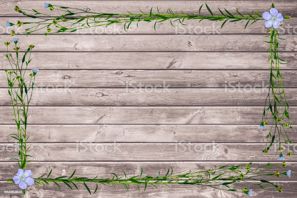 Frame from plant flax with flower and sheet stock photo