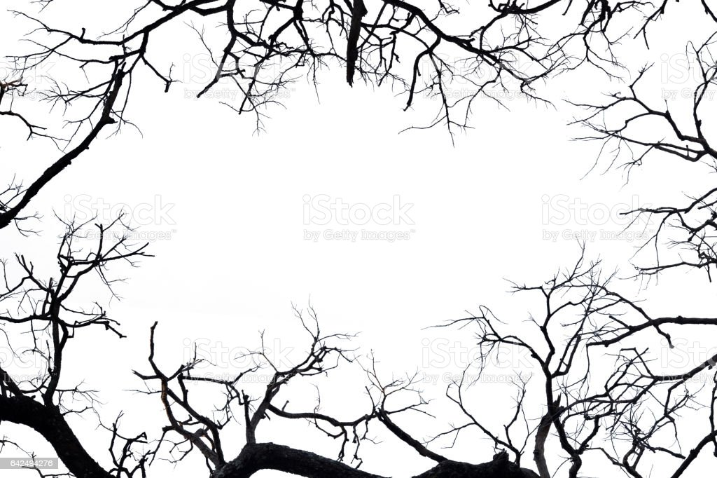 Frame From Silhouette Dead Branches Stock Photo & More Pictures of ...