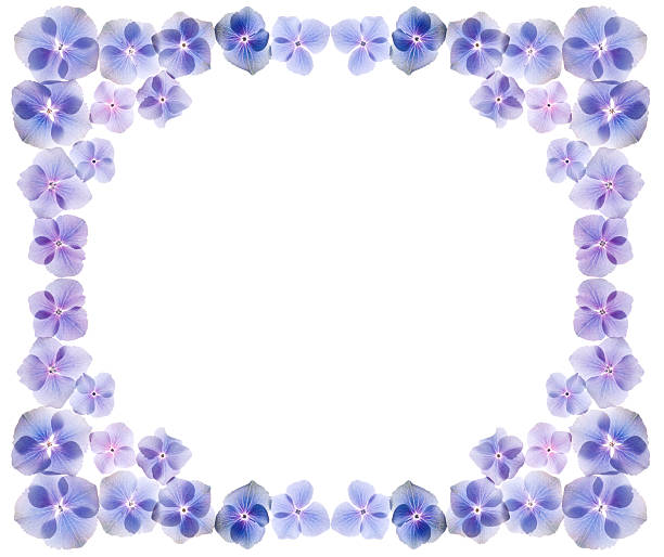 Frame from spring flowers stock photo