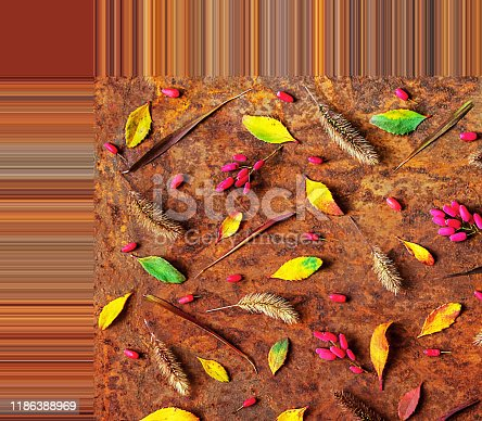 Frame, gradient. Pattern of red berries or barberry, colorful leaves and dried grass. On a dark abstract background. concept, panton, palette. Flat lay, top view.