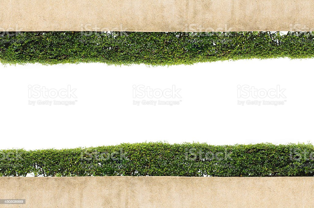 Frame green grass isolated on white background royalty-free stock photo