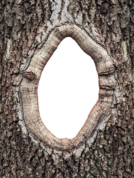 나무의 껍질에서 프레임을 닫습니다. - 속이 빈 뉴스 사진 이미지