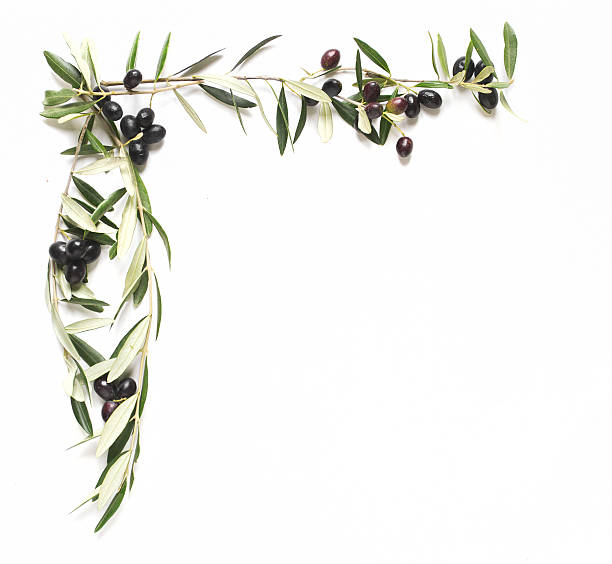 Royalty Free Olive Olive Tree Frame Olive Branch Pictures, Images ...