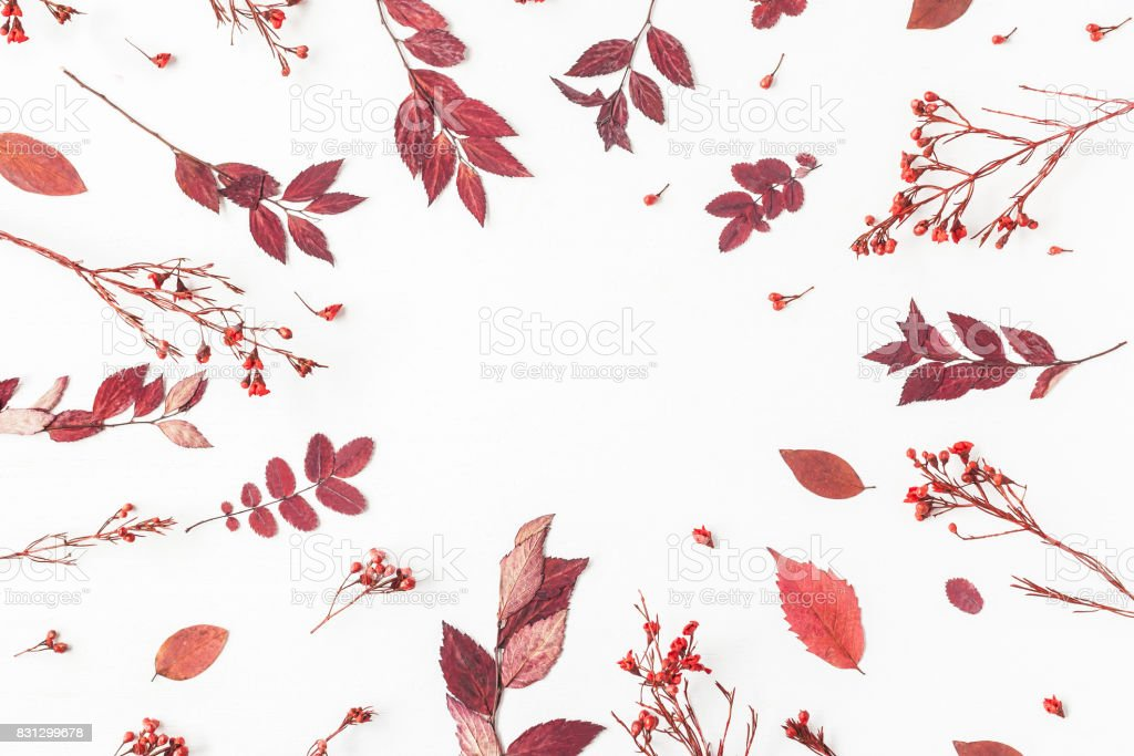 Frame made of autumn flowers, leaves. Flat lay, top view stock photo