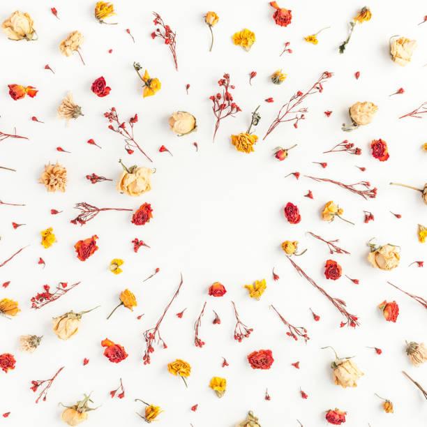 Frame made of autumn flowers leaves flat lay top view picture id848867748?b=1&k=6&m=848867748&s=612x612&w=0&h=hcvnw wewti7y0lfqtg9gwf5gpojr4su yrfweh2xum=