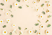 istock Frame made of chamomiles, petals, leaves on beige background. Flat lay, top view floral background. 1199484506