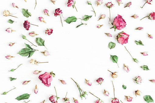 Frame made of dried rose flowers on white background