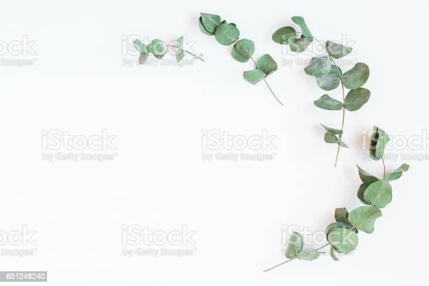 Frame made of eucalyptus branches flat lay top view picture id651248240?b=1&k=6&m=651248240&s=612x612&h=i kx58qye fxfuqtx4 6zhm7eurxp7h3kul5pa8wfhe=