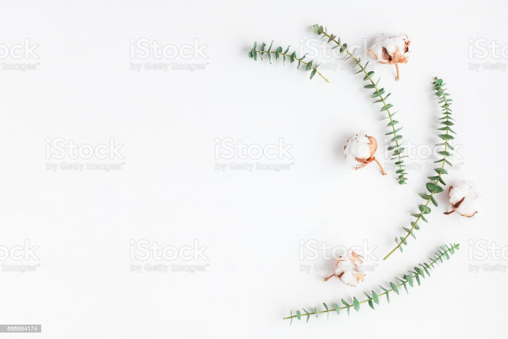 Frame made of fresh eucalyptus branches and cotton flowers stock photo