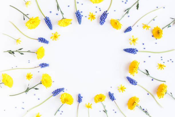 Frame made of muscari and chrysanthemum flowers on white background picture id693400390?b=1&k=6&m=693400390&s=612x612&w=0&h=ochm49mxggdamk0pb9ky uvzza54iw2o0xiknlzwn3q=