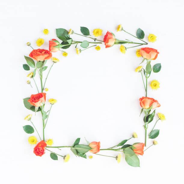 Frame made of orange rose flowers on white background - foto stock