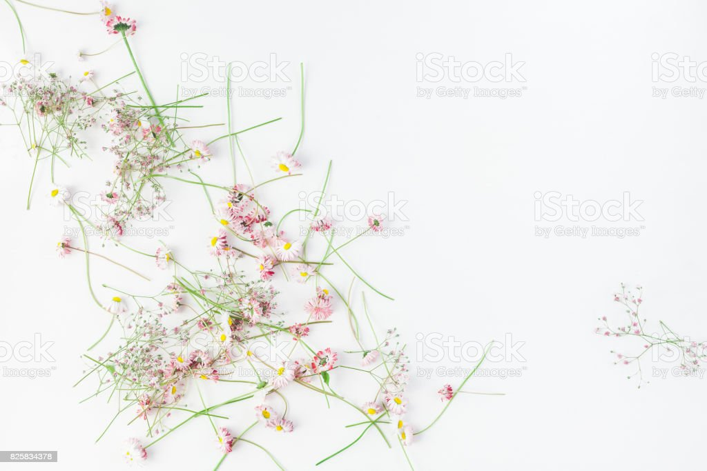 Frame made of pink gypsophila flowers. Flat lay, top view stock photo