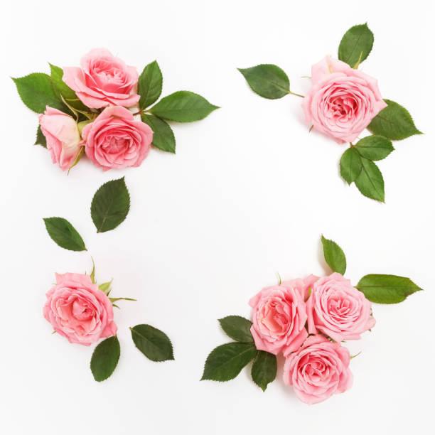 Rahmen aus rosa Rosen, grüne Blätter, Zweige, Blumenmuster auf weißem Hintergrund. Flach legen, Top Aussicht. – Foto