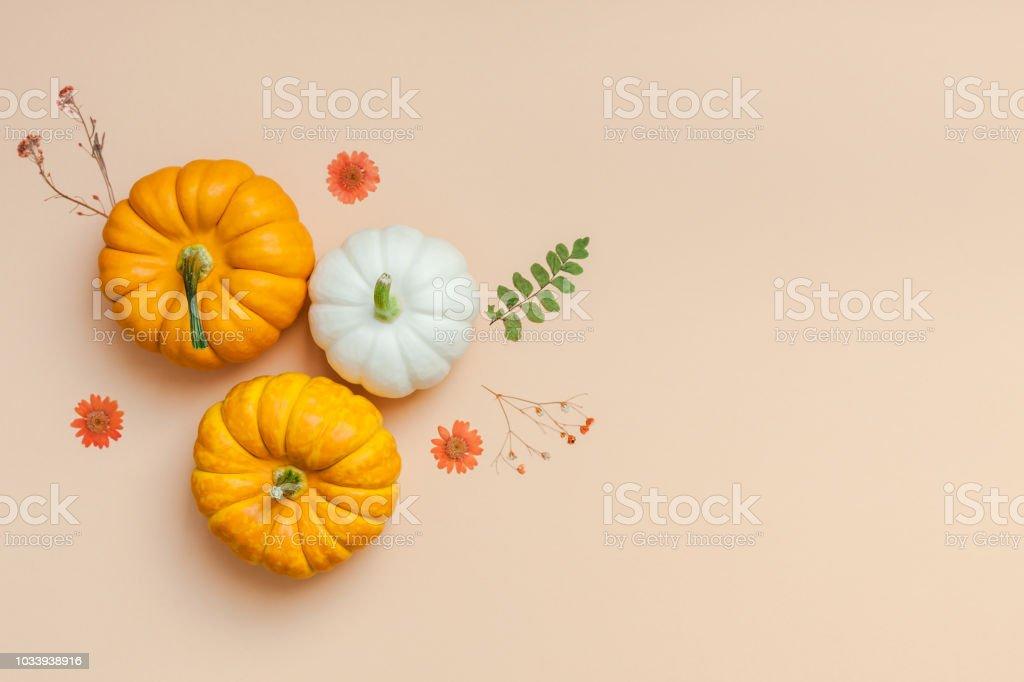 Frame made of pumpkins dried flowers and leaves - Zbiór zdjęć royalty-free (Biały)