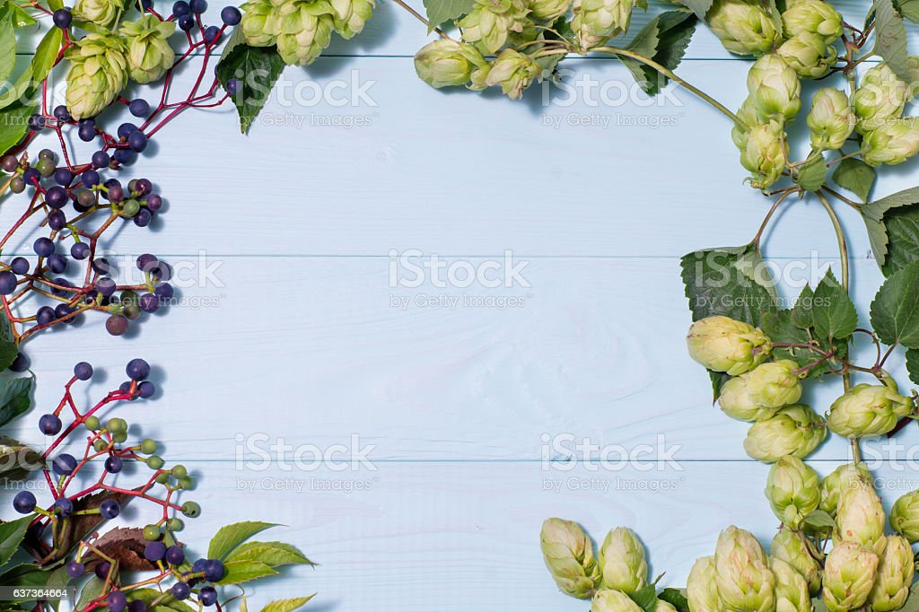 Frame made of wild grapes and fresh green hops stock photo