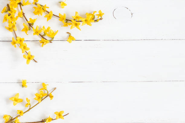 Frame made of yellow flowers on wooden white background stock photo