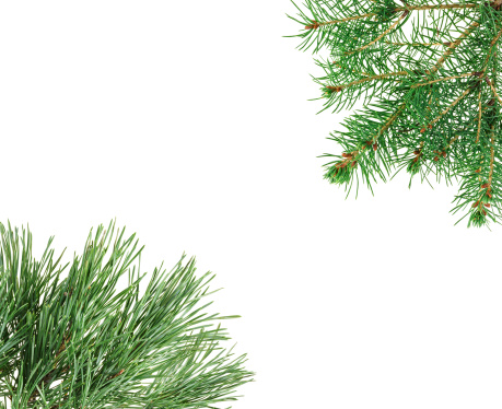 Frame made with pine twigs isolated on white, copyspaced
