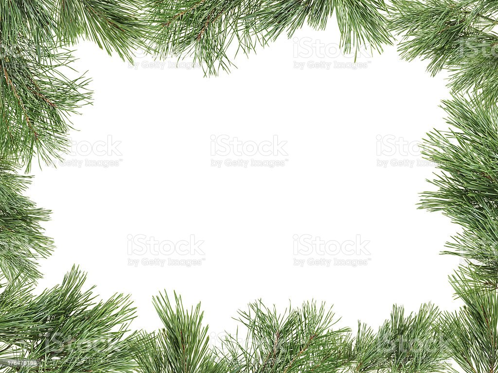 Frame made with pine twigs isolated on white, copyspaced stock photo