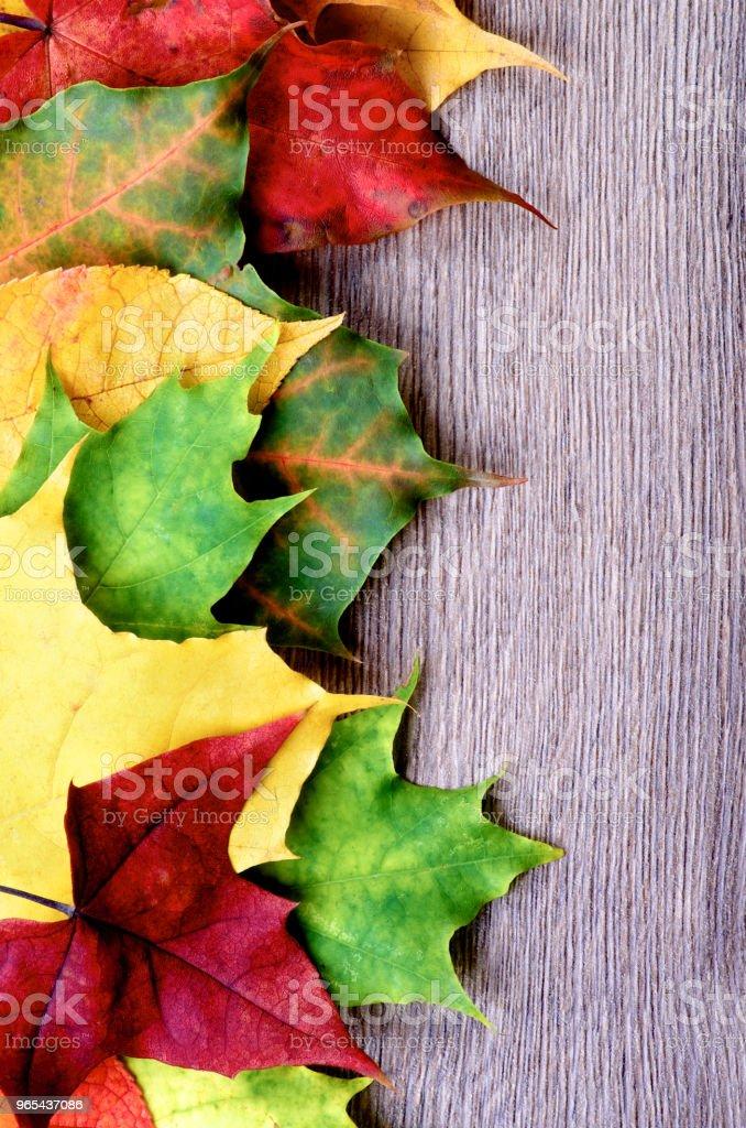 Frame of Autumn Leafs zbiór zdjęć royalty-free