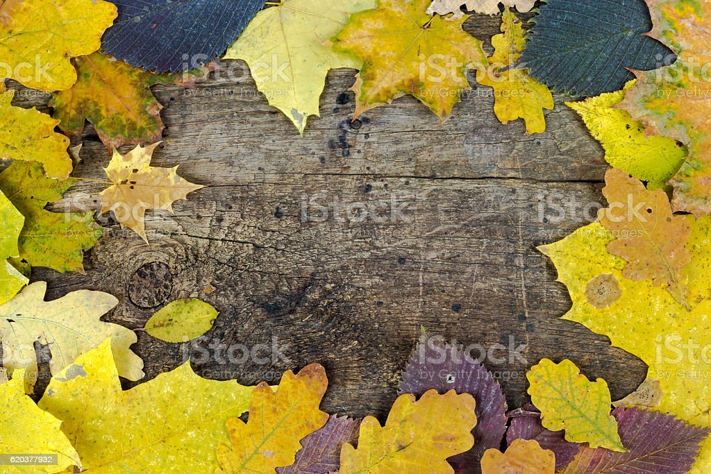 Frame of autumn leaves on a wooden board foto de stock royalty-free