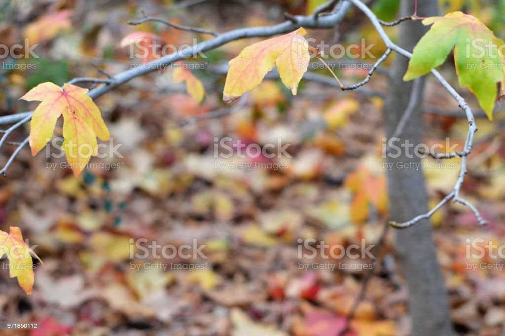 Frame of autumn leaves on tree stock photo