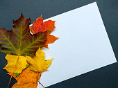 Frame of autumn leaves. White sheet of paper with a place for inscription. Blank for congratulations. Collage.
