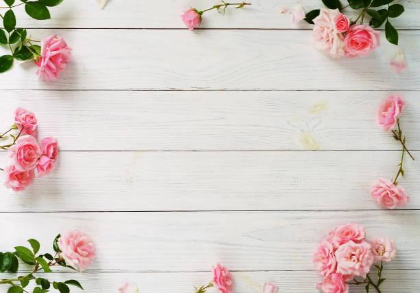 rahmen des schönen rosa rosen auf weißem hintergrund aus holz. - holzblumen stock-fotos und bilder