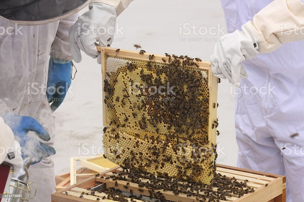 Frame of bees with drone comb stock photo