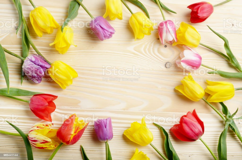 Frame of colorful tulips on natural wooden background with space for text zbiór zdjęć royalty-free