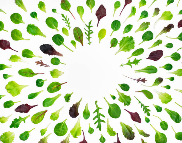 frame of different salad leaves on white background - lettuce stock pictures, royalty-free photos & images