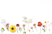 istock Frame of dry flowers on white background. 1204455399