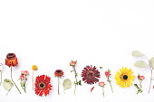 istock Frame of dry flowers on white background. 1205815263