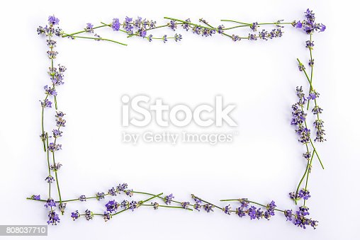 istock A frame of fresh lavender flowers on a white background. Lavender flowers mock up. Copy space. 808037710
