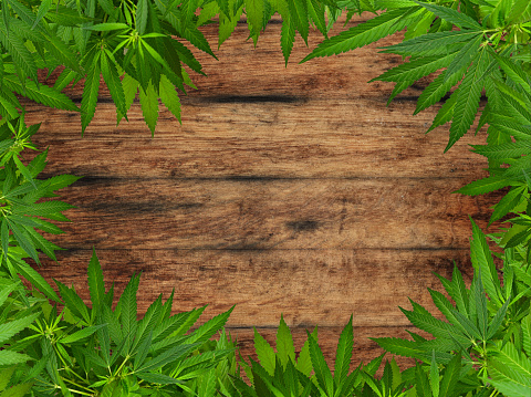 655844066 istock photo Frame of green cannabis leaves over wood 1257232289