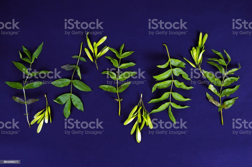 frame of green leaves on dark background - Royalty-free Dark Stock Photo