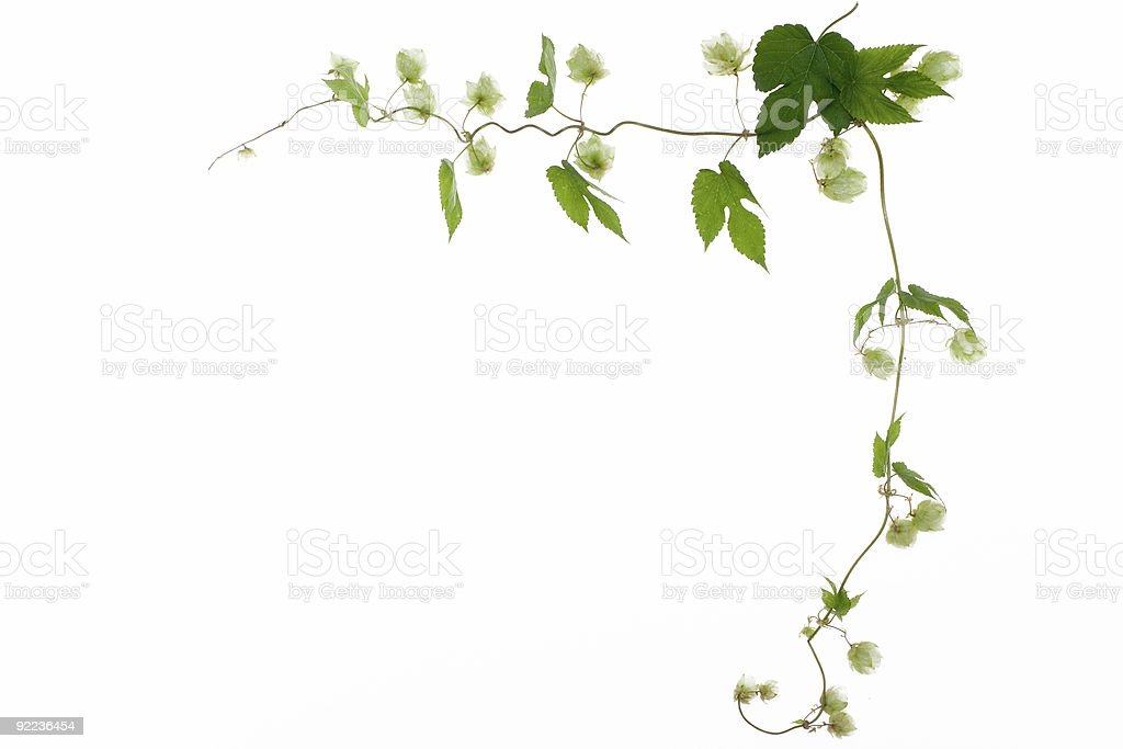 frame of greenhop royalty-free stock photo