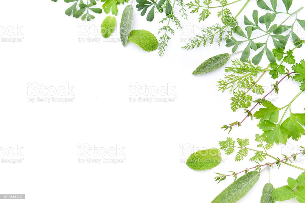 frame of herbal leaves in white background stock photo