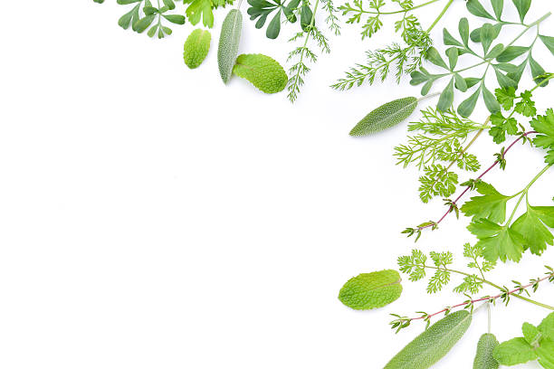 frame of herbal leaves in white background - kräutermedizin stock-fotos und bilder
