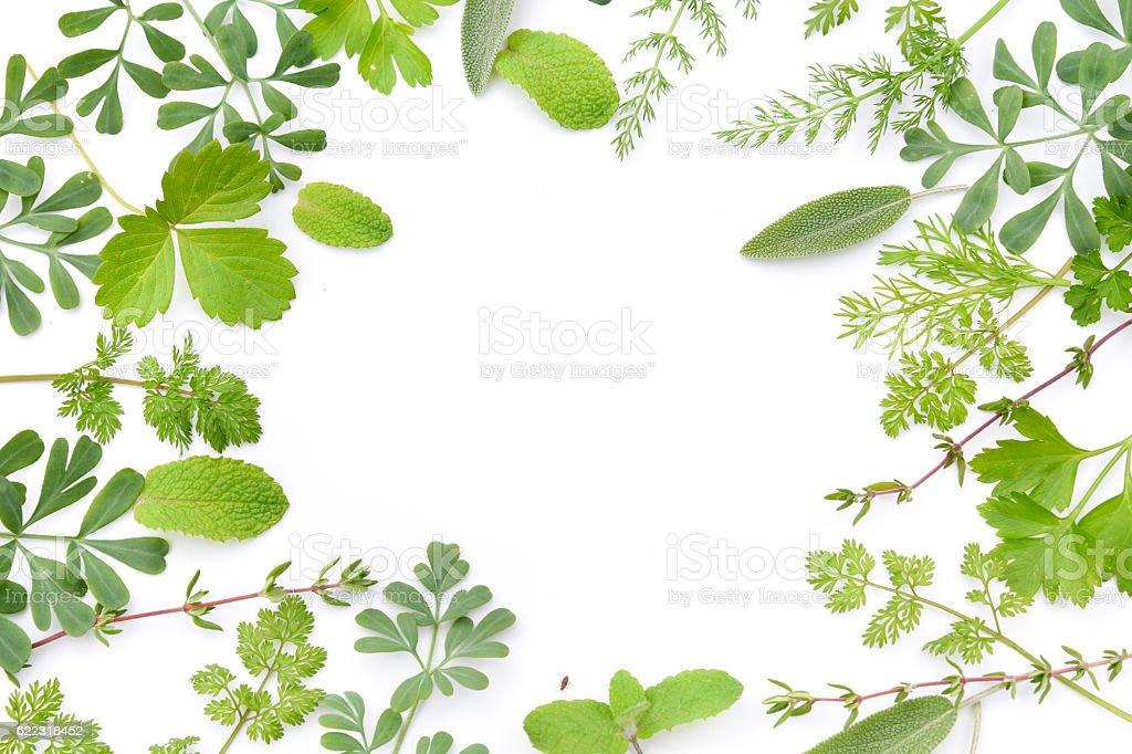 Frame Of Herbal Leav