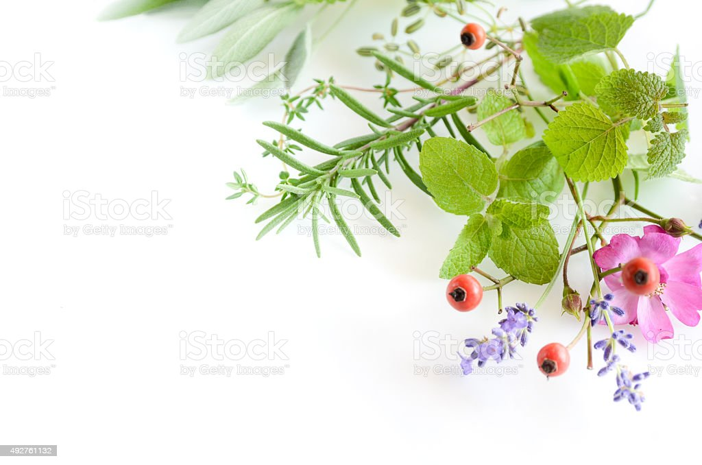 frame of herbs stock photo