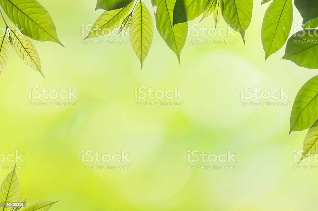 frame of isolated branch of  leave on blur green background stock photo