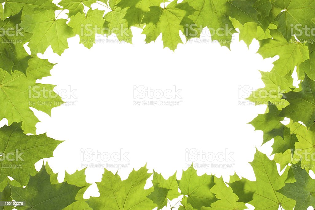 Frame of maple leaves in backlight royalty-free stock photo