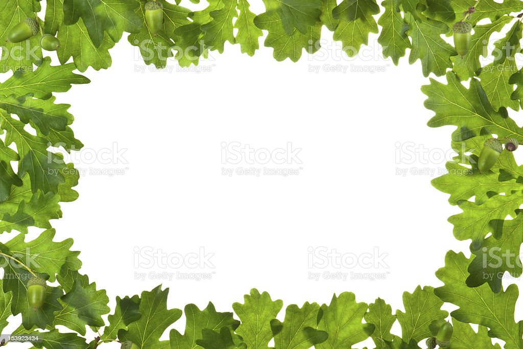 Frame of oak leaves in backlight royalty-free stock photo